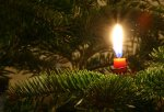 Candle on evergreen tree